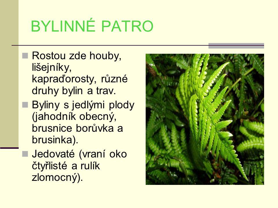 BYLINNÉ PATRO Rostou zde houby, lišejníky, kapraďorosty, různé druhy bylin a trav.