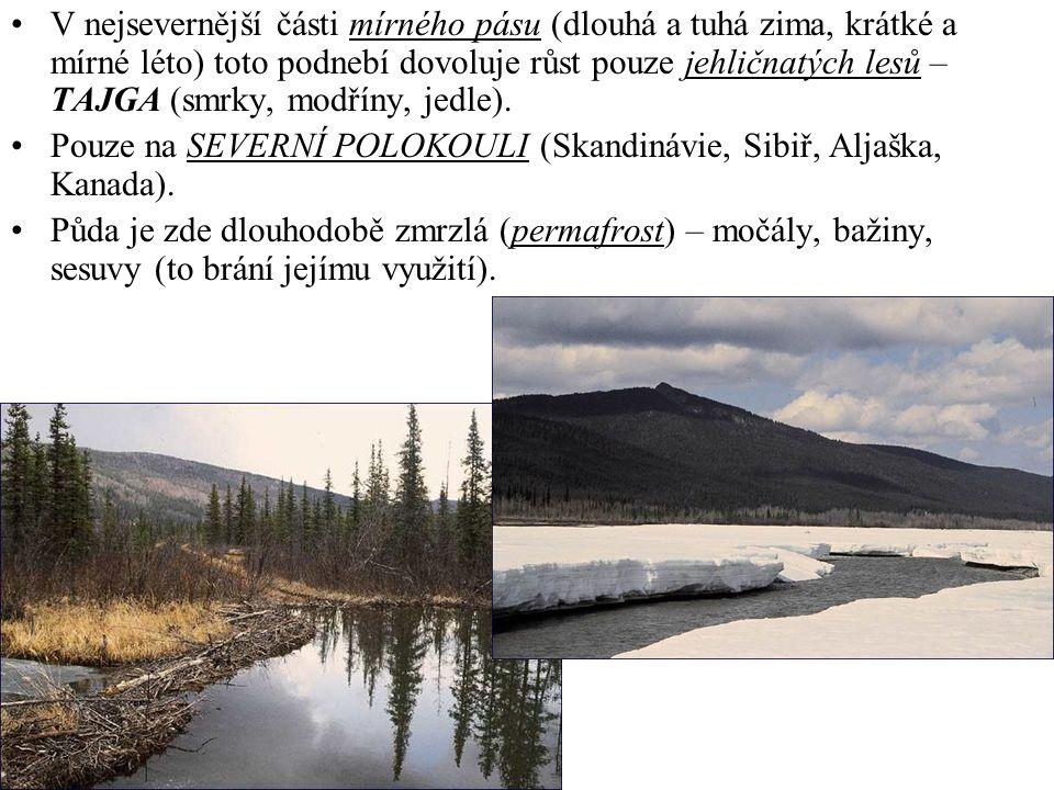 V nejsevernější části mírného pásu (dlouhá a tuhá zima, krátké a mírné léto) toto podnebí dovoluje růst pouze jehličnatých lesů – TAJGA (smrky, modříny, jedle).