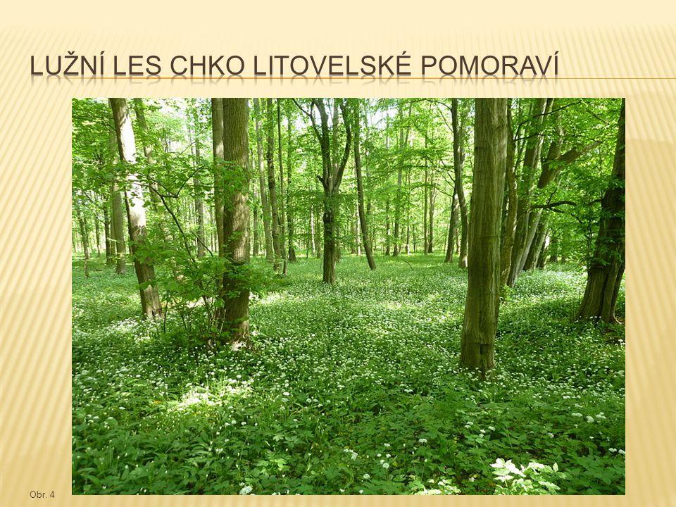 Lužní les chko litovelské pomoraví