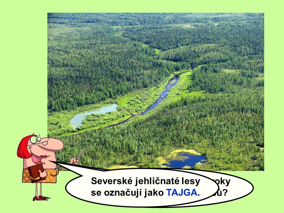 Severské jehličnaté lesy se označují jako TAJGA.