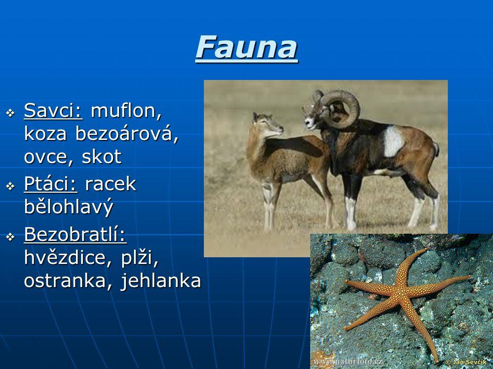 Fauna Savci: muflon, koza bezoárová, ovce, skot Ptáci: racek bělohlavý