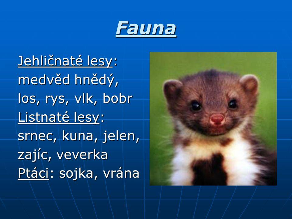 Fauna Jehličnaté lesy: medvěd hnědý, los, rys, vlk, bobr