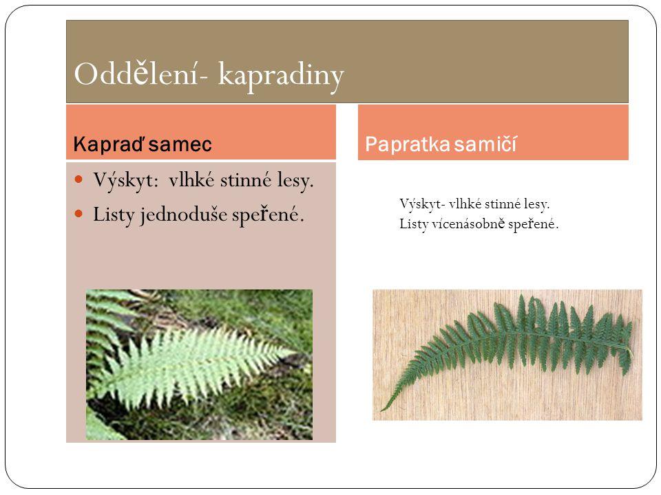 Oddělení- kapradiny Výskyt: vlhké stinné lesy.