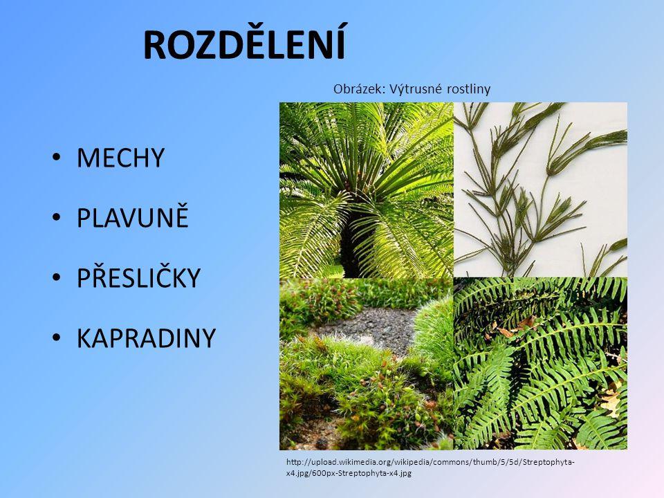 ROZDĚLENÍ MECHY PLAVUNĚ PŘESLIČKY KAPRADINY Obrázek: Výtrusné rostliny