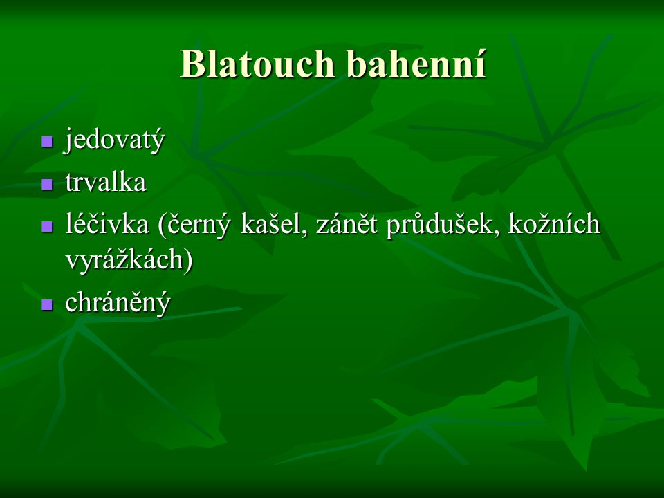 Blatouch bahenní jedovatý trvalka