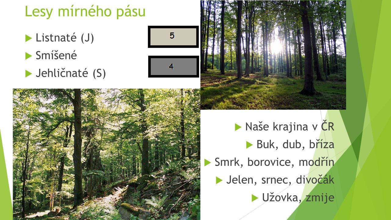 Lesy mírného pásu Listnaté (J) Smíšené Jehličnaté (S)