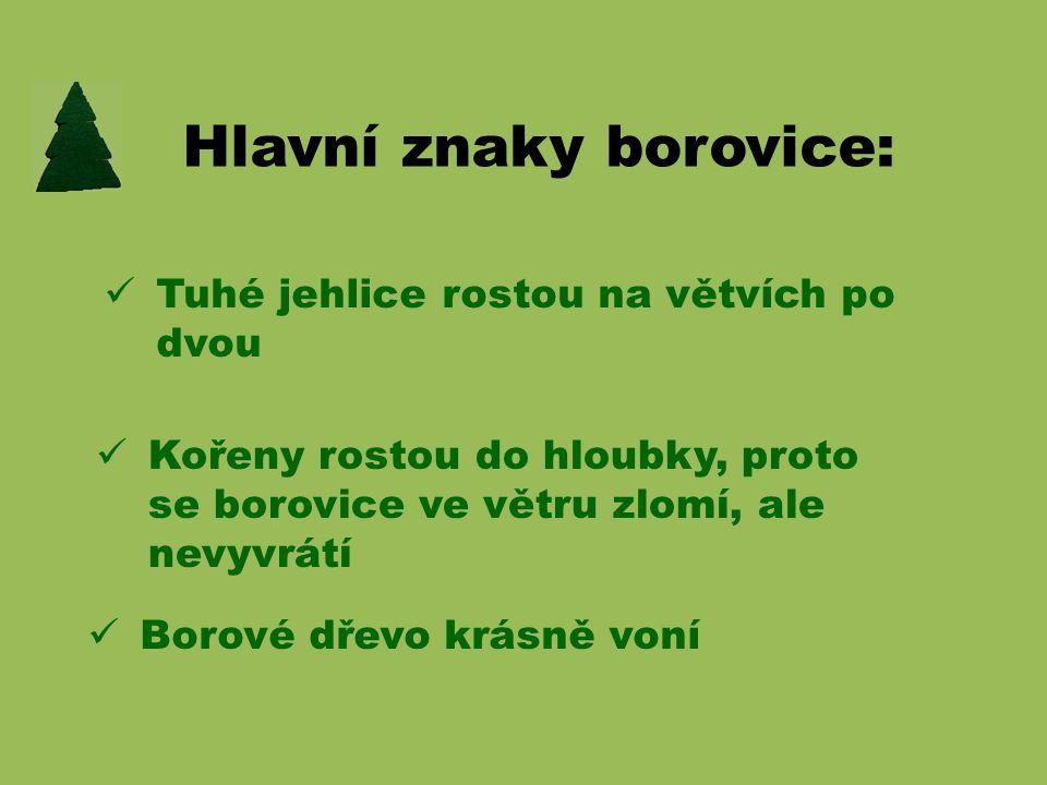 Hlavní znaky borovice: