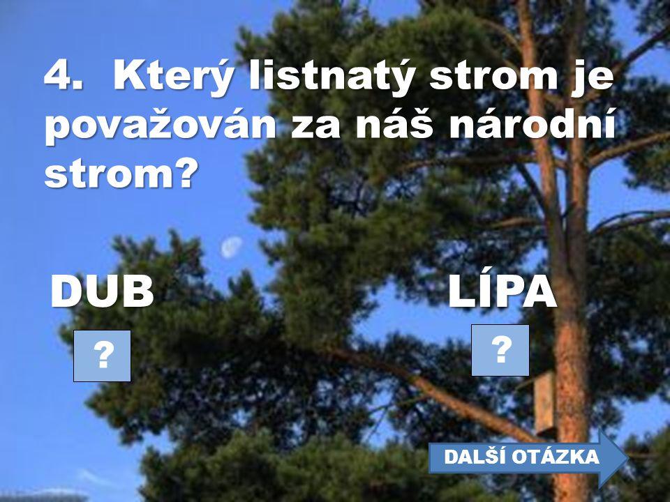 DUB LÍPA 4. Který listnatý strom je považován za náš národní strom