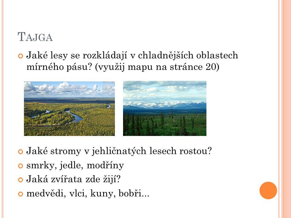 Tajga Jaké lesy se rozkládají v chladnějších oblastech mírného pásu (využij mapu na stránce 20) Jaké stromy v jehličnatých lesech rostou