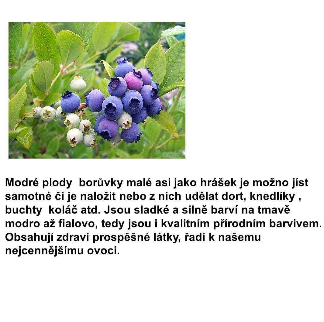 Modré plody borůvky malé asi jako hrášek je možno jíst samotné či je naložit nebo z nich udělat dort, knedlíky , buchty koláč atd.
