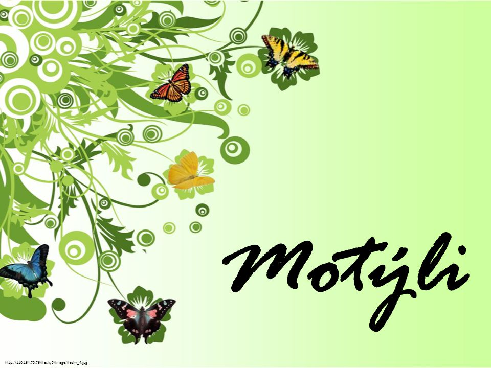 Motýli http://110.164.70.76/freshy5/Image/freshy_4.jpg