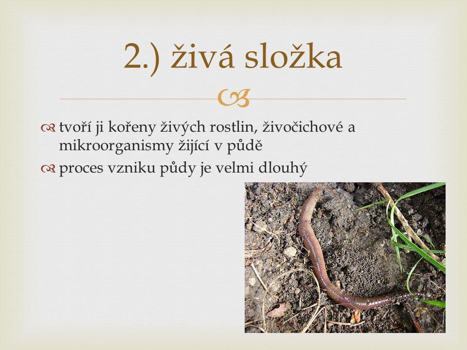 2.) živá složka tvoří ji kořeny živých rostlin, živočichové a mikroorganismy žijící v půdě.