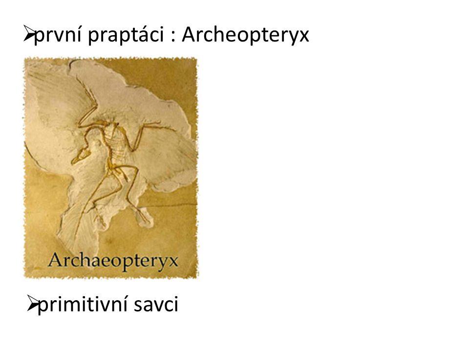 první praptáci : Archeopteryx