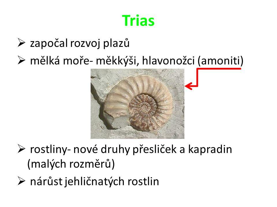 Trias započal rozvoj plazů mělká moře- měkkýši, hlavonožci (amoniti)
