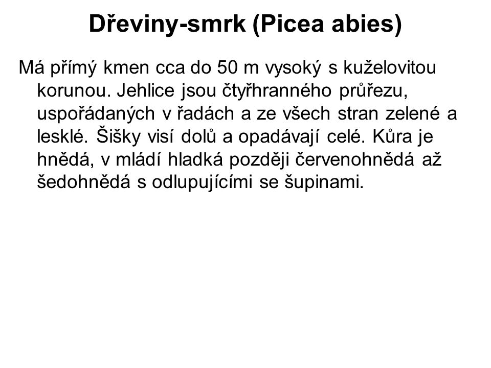 Dřeviny-smrk (Picea abies)