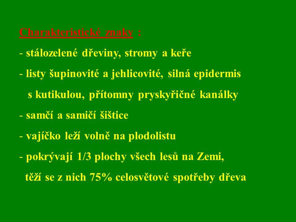 Charakteristické znaky :