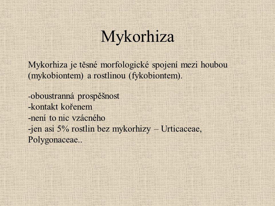 Mykorhiza Mykorhiza je těsné morfologické spojení mezi houbou