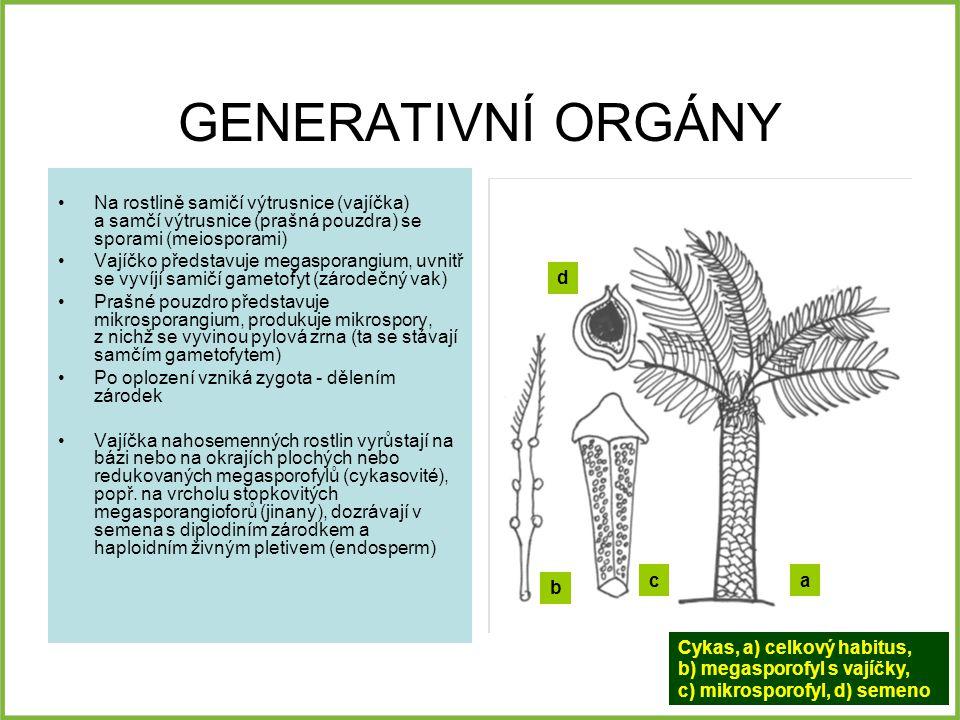 GENERATIVNÍ ORGÁNY Na rostlině samičí výtrusnice (vajíčka) a samčí výtrusnice (prašná pouzdra) se sporami (meiosporami)