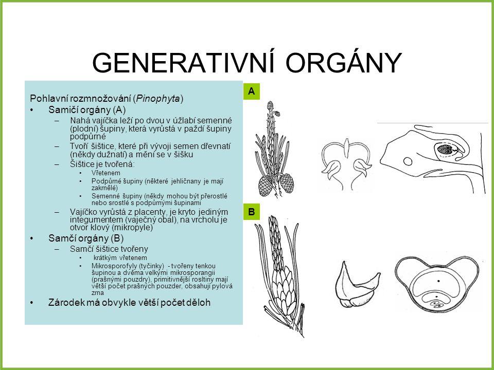 GENERATIVNÍ ORGÁNY A Pohlavní rozmnožování (Pinophyta)