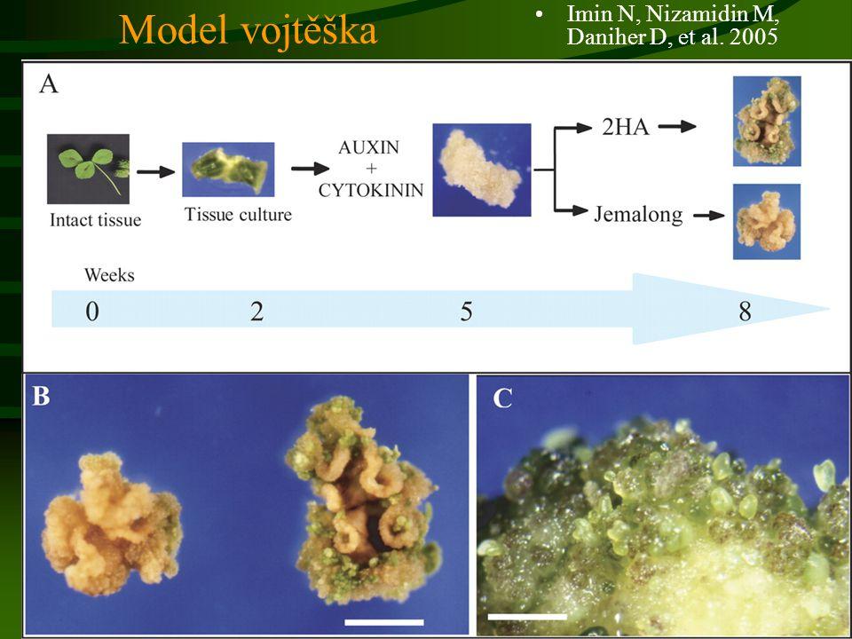 Model vojtěška Imin N, Nizamidin M, Daniher D, et al. 2005