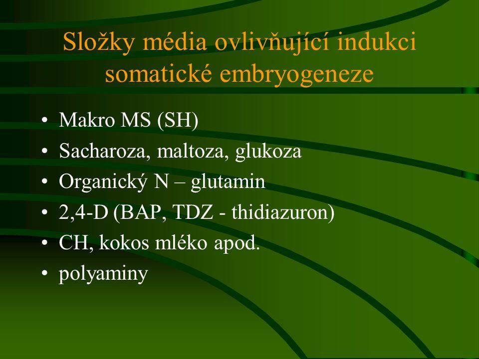 Složky média ovlivňující indukci somatické embryogeneze
