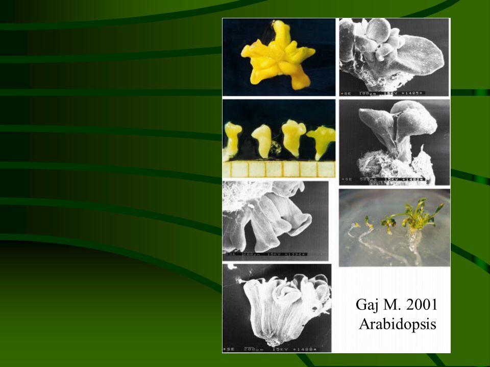 Gaj M. 2001 Arabidopsis