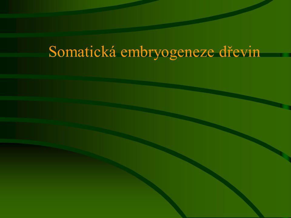 Somatická embryogeneze dřevin