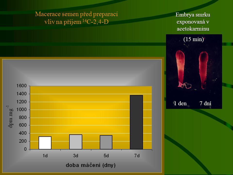 Macerace semen před preparací vliv na příjem 14C-2,4-D