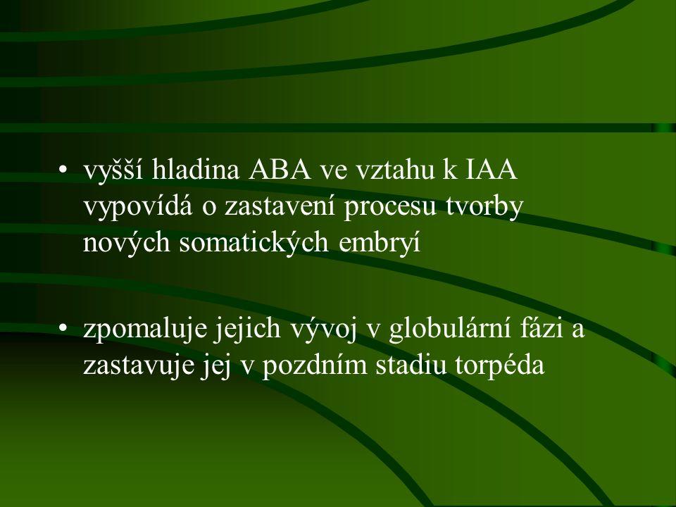 vyšší hladina ABA ve vztahu k IAA vypovídá o zastavení procesu tvorby nových somatických embryí