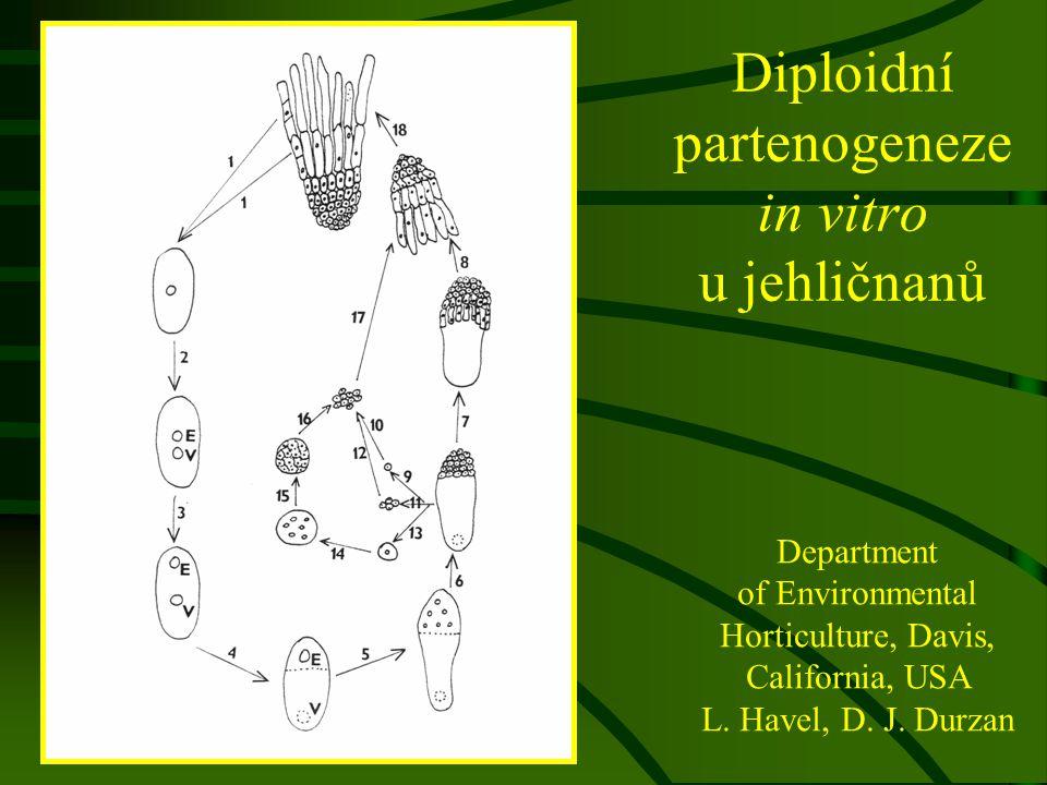 Diploidní partenogeneze in vitro u jehličnanů