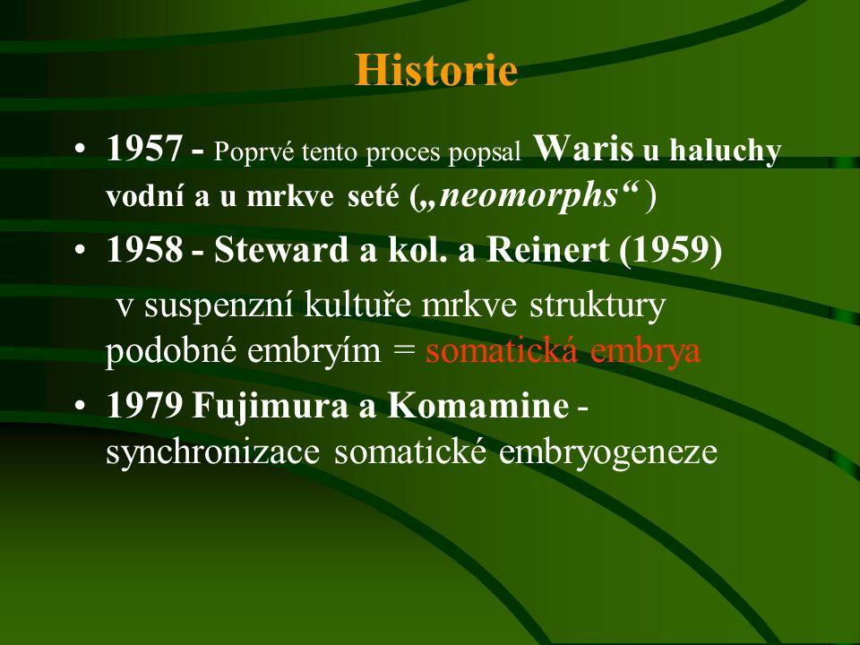 """Historie 1957 - Poprvé tento proces popsal Waris u haluchy vodní a u mrkve seté (""""neomorphs ) 1958 - Steward a kol. a Reinert (1959)"""
