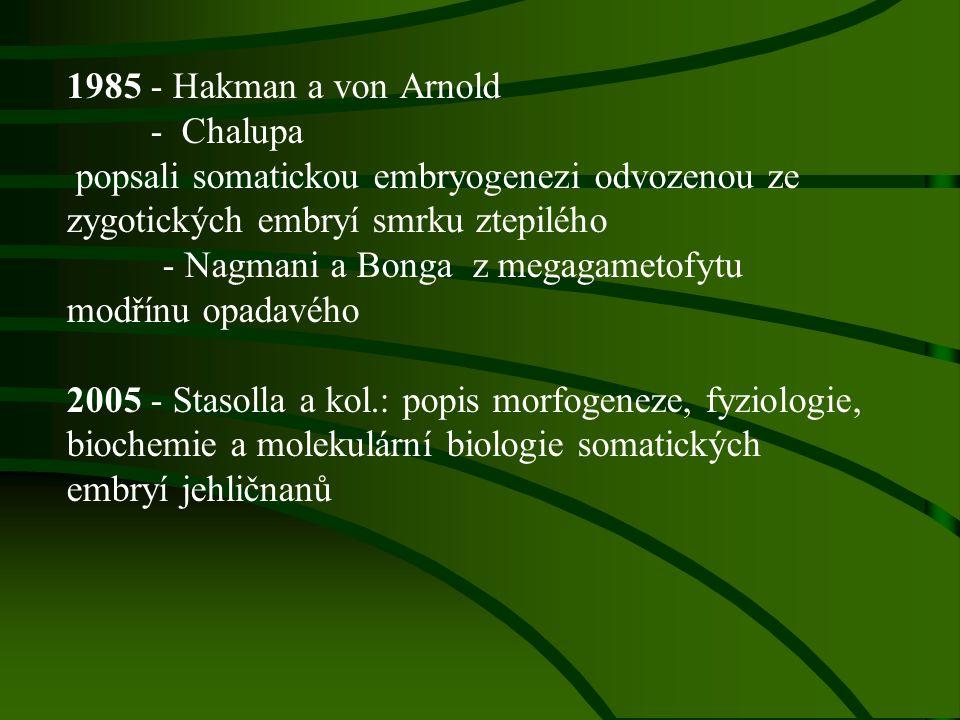 1985 - Hakman a von Arnold - Chalupa popsali somatickou embryogenezi odvozenou ze zygotických embryí smrku ztepilého - Nagmani a Bonga z megagametofytu modřínu opadavého 2005 - Stasolla a kol.: popis morfogeneze, fyziologie, biochemie a molekulární biologie somatických embryí jehličnanů
