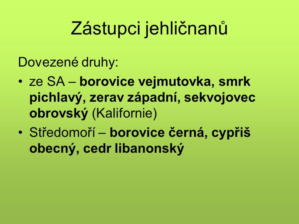 Zástupci jehličnanů Dovezené druhy: