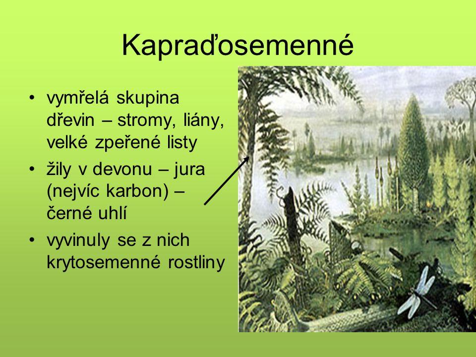 Kapraďosemenné vymřelá skupina dřevin – stromy, liány, velké zpeřené listy. žily v devonu – jura (nejvíc karbon) – černé uhlí.