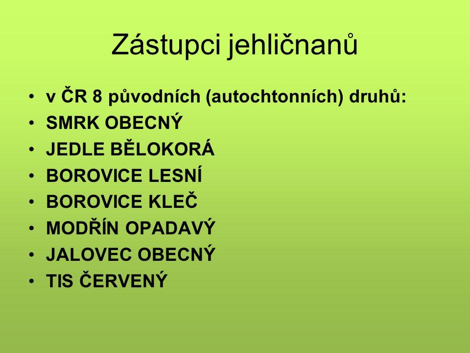 Zástupci jehličnanů v ČR 8 původních (autochtonních) druhů: