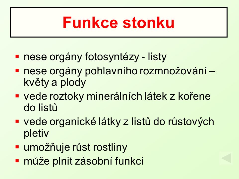 Funkce stonku nese orgány fotosyntézy - listy