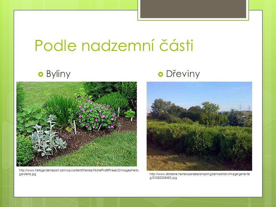 Podle nadzemní části Byliny Dřeviny