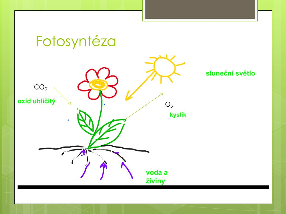 Fotosyntéza CO2 O2