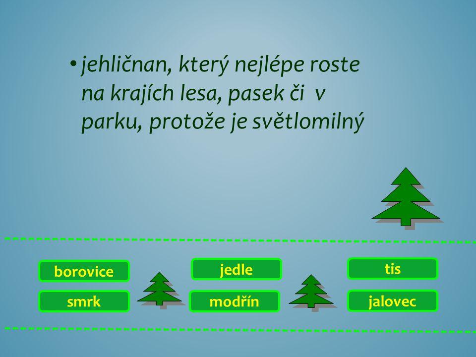 jehličnan, který nejlépe roste na krajích lesa, pasek či v parku, protože je světlomilný