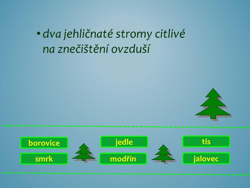 dva jehličnaté stromy citlivé na znečištění ovzduší