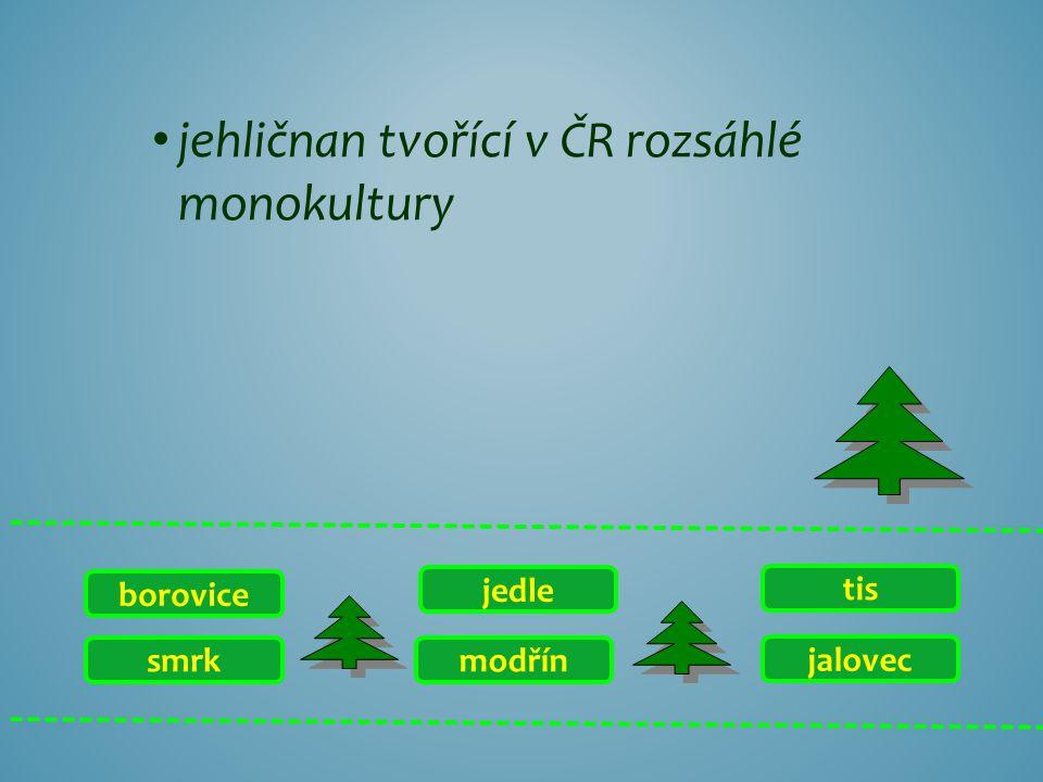 jehličnan tvořící v ČR rozsáhlé monokultury