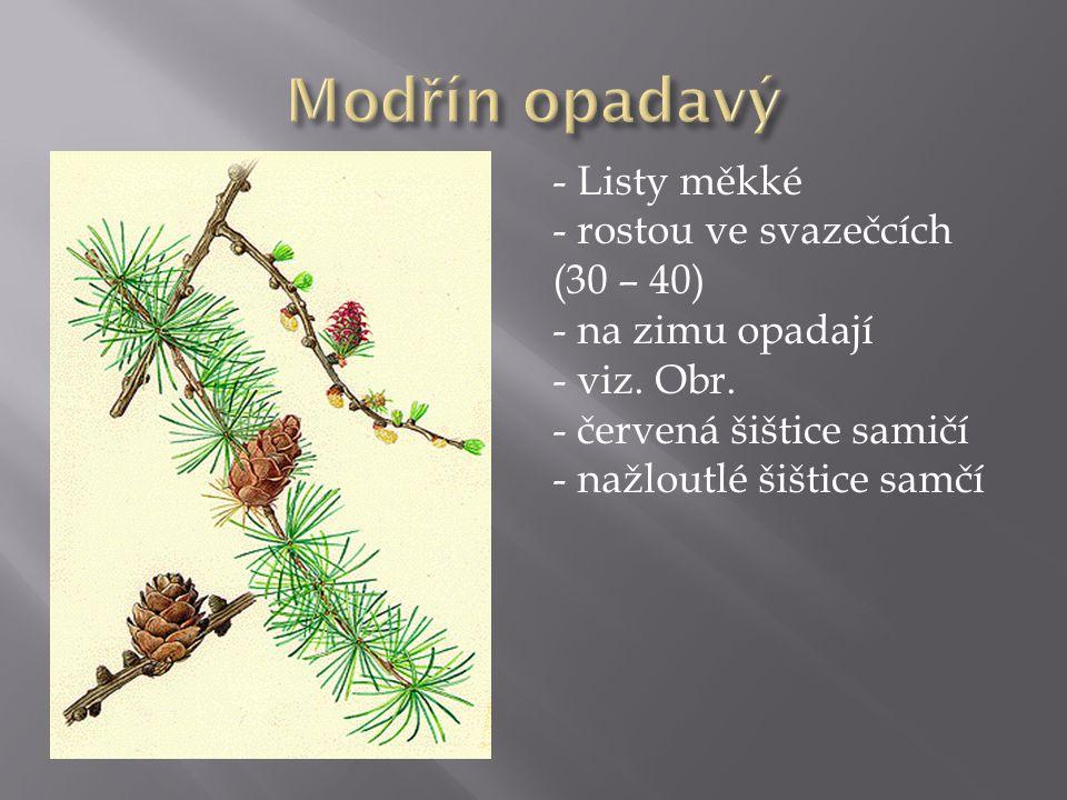 Modřín opadavý Listy měkké rostou ve svazečcích (30 – 40)