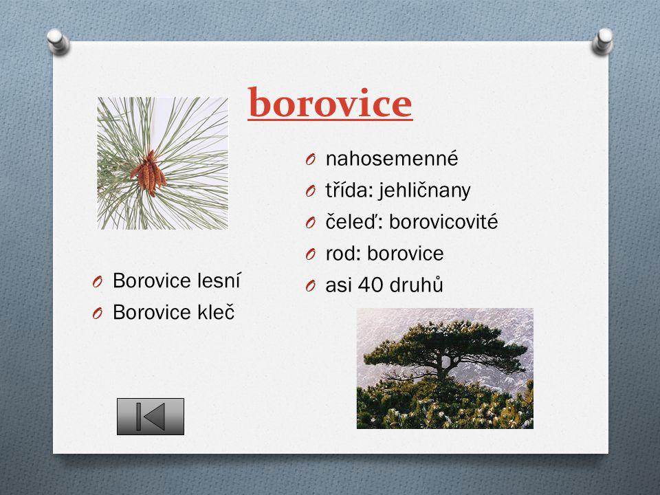 borovice nahosemenné třída: jehličnany čeleď: borovicovité