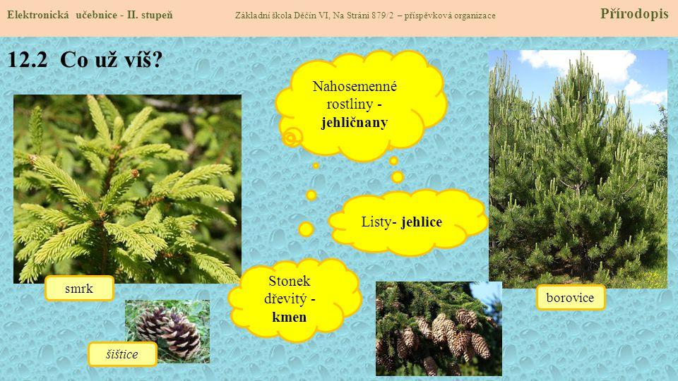 Nahosemenné rostliny - jehličnany