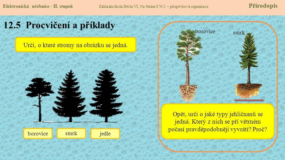 Urči, o které stromy na obrázku se jedná.