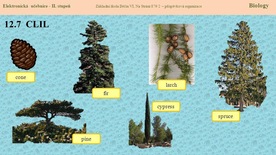 12.7 CLIL cone larch fir cypress spruce pine