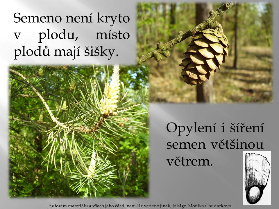 Semeno není kryto v plodu, místo plodů mají šišky.