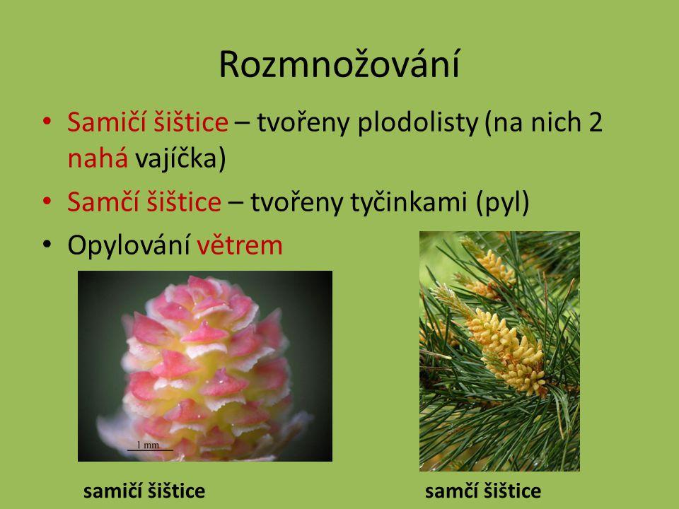 Rozmnožování Samičí šištice – tvořeny plodolisty (na nich 2 nahá vajíčka) Samčí šištice – tvořeny tyčinkami (pyl)