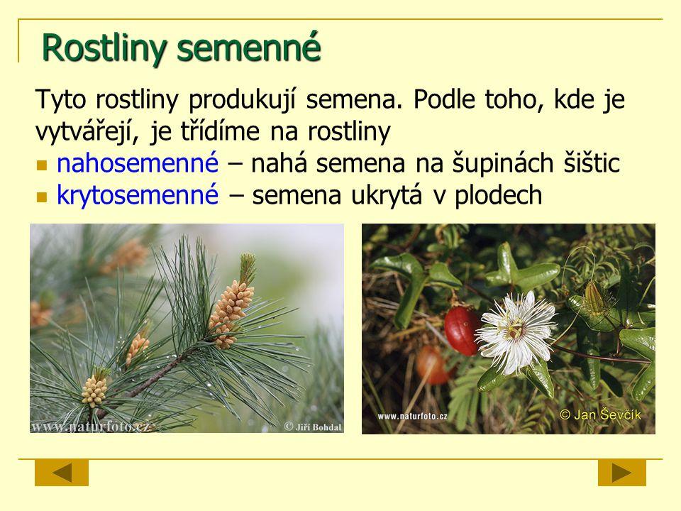 Rostliny semenné Tyto rostliny produkují semena. Podle toho, kde je vytvářejí, je třídíme na rostliny.