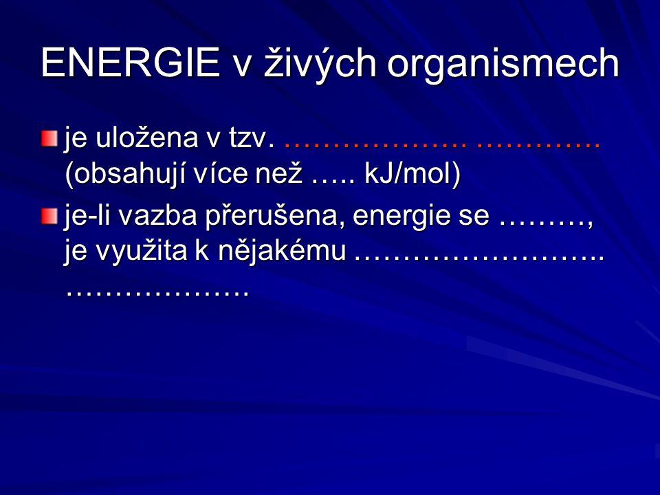 ENERGIE v živých organismech
